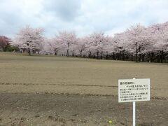 一週間前と同じアングルで。 天気はあまり良くないけれど、桜は満開。  「赤城南面千本桜」