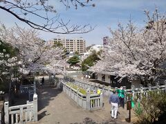 右手の建物は赤穂浪士記念館で、浪士たちの遺品や関連するものの展示があります。なかなかの見ごたえがありました。  それにしても見事な桜です。お墓に眠るチーム赤穂の面々も毎年春は皆でお花見でもしているんでしょうか。