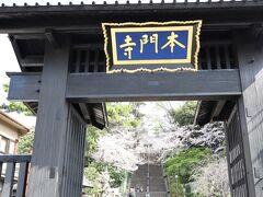 東京池上本門寺の春 比較的こちらの桜は遅咲きです