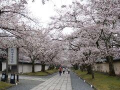 9時の開門まで、霊宝館前の桜並木で待ちます。