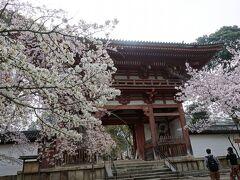 伽藍のほうに向かいます。  仁王門。ヤマザクラとソメイヨシノ。