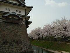 お堀沿いの桜、素敵~
