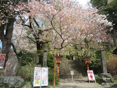 途中道を間違えましたが談合坂から1時間程走って新倉浅間公園に着きました。 バイクは駐車料金が500円でした。 桜はまだ残っていました。