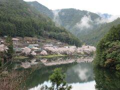 七色ダム湖 奈良県側桜堤
