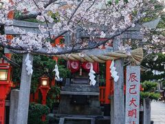 辰巳大明神と桜。