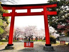 平野神社 https://www.hiranojinja.com/  エルタンから電車とバスを乗り継いで平野神社に到着。 今日も地下鉄とバスのチケットをフルに使いますよぉ♪