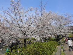 そのまま円山公園に抜けます。  ブルーシートを敷いての宴会は禁止されていますが、桜の木の下にいる人もちらほら。