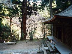 室生寺弥勒堂下にも桜が咲いでいた。