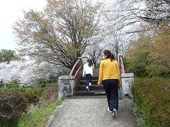 菊池公園は桜の名所なんだとか。