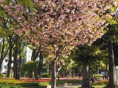八重桜を目にすると反射的に思い出すのが、大阪の造幣局の通り抜け。 2021年は事前申込制だったようですね。