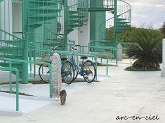 階段を降りると、猫ちゃんがお出迎え(*^^*)。