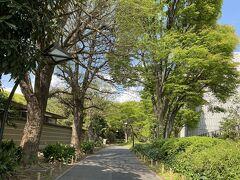 予定の電車まで少し時間があったので上野公園を少し歩きました。