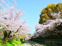 インクライン https://biwakososui.kyoto.travel/midokoro/214  琵琶湖疏水による舟運ルートの一区間をなしていた傾斜鉄道(インクライン)にやって来た~廃線の両脇に咲き誇る桜が見事な桜の名所。 いやいや名所だけあってか朝から人がいっぱい来てたねぇ( ;∀;)