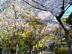 哲学の道  京都の桜名所のお次は、哲学の道。