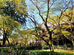 真正極楽寺(真如堂) https://shin-nyo-do.jp/  ここは秋景色がやっぱり綺麗だわ~真っ赤に色づいたもみじと光の印影がとっても美しい秋だったことを思い出す。