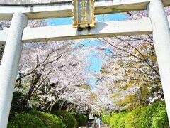 宗忠神社 https://munetadajinja.jp/  秋に4トラベラーのまやこと一緒に歩いた場所。まやこは「ここは春、桜の頃が綺麗やで!」って教えてくれたんだ。 「じゃあ春にも来なくちゃ」なんて言っててホントに来れると思ってなかったけど、こうして見ることが出来て良かった♪今回はまやこには会えなかったけど、またすぐ来るからねぇ(笑)