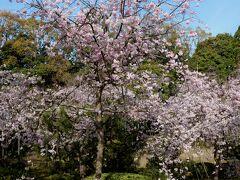 平安神宮の神苑へ初めて入場します。(8:30~ 600円) 南神苑は別名「平安の苑」