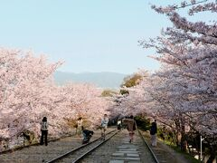 地下鉄蹴上駅そばの「インクライン」は、桜の名所です。 琵琶湖疎水の急斜面で、船を運行するために敷設された傾斜鉄道の跡地です。 舟の行き来がなくなった後、文化財の指定を受け、観光名所に。
