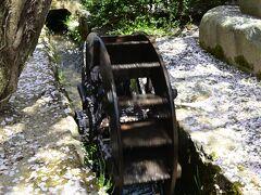 まちの特徴でもある水路。花びらがべっとりと着いた水車が勢いよく回る