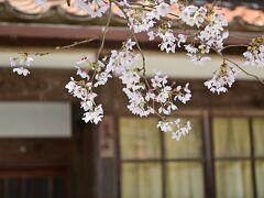 ひとつきの桜もこの日限り。また、来年に