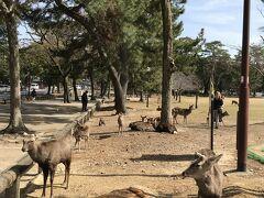 奈良公園 晴天のもと鹿さん達が、思い思いに過ごしています・・