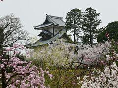 桜に導かれ金沢城に来ました。