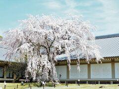 三宝院、伽藍とめぐり、最後に訪れたのが霊宝館  上醍醐から下醍醐を含めて約200万坪に及ぶ広大な寺域をもつ醍醐寺には、京都で最も古い天暦5年(951)建立の五重塔をはじめ金堂、薬師堂など歴史的に貴重な建造物、さらには仏像・絵画・工芸品など10万点以上(うち国宝75,537点、重要文化財430点)の寺宝を伝承しています。これらの寺宝の保存と公開を兼ねた施設が霊宝館です。 ※醍醐寺HPより https://www.daigoji.or.jp/grounds/reihoukan.html