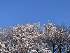 2020年の春に見た桜をもう1度♪  昭和インターからすぐのところにある見事な桜並木。 インターからすぐの道の駅あぐりーむ昭和、駐車場の拡張工事が済んでいました。朝早すぎて店に寄れず(笑)