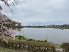 千波湖に到着。 遠くに偕楽園が見えます。