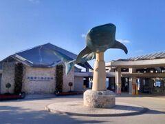 寄り道しつつ、到着!  美ら海水族館、なんと14年ぶりです。