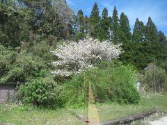 2021.04.03 桂川ゆき普通列車車内 桜もちらほら残っている。