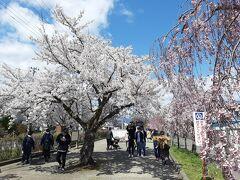 米沢から喜多方に出て、喜多方の桜の名所、日中線記念自転車歩行者道へ。  どうやってここに行こうか考えていたのですが、 なんてことはない、国道を走っていたら臨時駐車場の案内が出ていました。