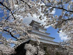 タクシーで会津若松城・鶴ヶ城へ。タクシー1,150円。今日、桜が満開になりました。