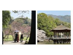 お天気もよく桜も満開、記念撮影中のカップルで混みあっていました(笑)和装と桜と浮見堂、今だけのベストショットですね。
