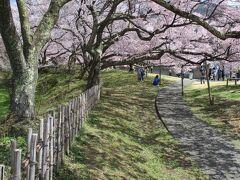 高遠城址公園に着くも、公園内は混雑の気配。 「この辺りも綺麗だよね」と、つい公園と反対の方へ進んでしまう一家。敷地の際まで来てしまいました。