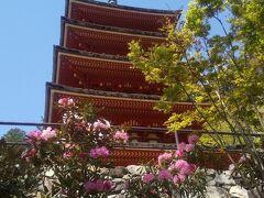 参道の石段を降りながら振り返って 花の間から五重塔を撮影しました。