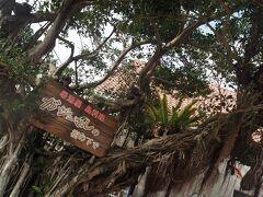 伝泊奄美ホテルのすぐ隣に、「ガジュマルの樹の下で」という居酒屋がある。 徒歩圏内の居酒屋はここだけかな。