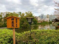 二条城のライトアップまでまだ時間があるので 神泉苑にも行ってみたり・・・ けれどももうこちらは葉桜