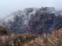 沸き立つ雲の中に アカヤシオの群生地がのぞめまーす♪