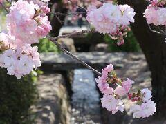 水路の両側に続く花道