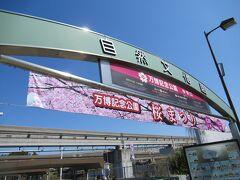 名神高速の陸橋を渡って万博公園の自然文化園に向かいます。もう遅いけど、まだ桜まつりやってるよう。