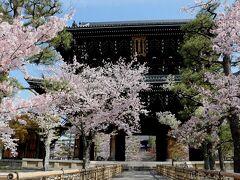 「黒谷」の中で一番有名な「金戒光明寺」は沢山の満開の桜がお出迎え(*^^)v ここは新撰組発祥の地で、立派な構えがあり、御所に近く、大勢の軍隊が駐屯できる要所でした。 お彼岸頃に、京都盆地の向こう西の小倉山に沈む見事な夕陽が眺められるそうです。