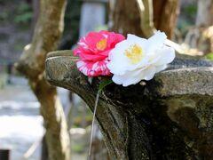 この時季ならではの美しい花手水が印象的(#^^#)
