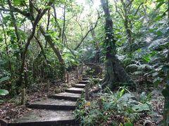 入り口から天然記念物のヤエヤマヤシ自生林に入ると、遊歩道は整備されていますがやや薄暗く、ジャングル探検のように散策ができます。やはり本土の林とは違います。