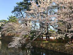 うわぁ~、満開。  サクラの季節は大阪、京都、奈良の近場の桜が恒例だったので、 遠出してこれだけドンピシャは何年か前に行った下呂温泉以来。