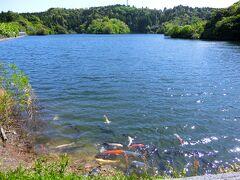 昭和の森を下ると、小中池公園に出る。