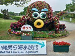 本日のメインイベント~! 美ら海水族館~♪♪♪  沖縄美ら海水族館へやって来ましたよ。  駐車場はP7立体駐車場が水族館へ行くのは便利です。 美ら海水族館は、海洋博公園内にあります。 駐車場は無料です。  駐車場の案内のおじさん達があちこちにいらっしゃいます。 「車椅子です~」と伝えると、車椅子用の駐車場へと誘導して下さいました。