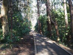 周りは高い木々が覆い茂っておりますが、散策道はきちんとコンクリで整備されております。