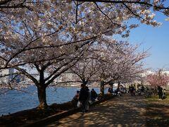 この年の桜も、満開&快晴ー  地元の人たちも敷物引いて、 隅田川と花見を見ながらの、贅沢な時間を過ごしていたー