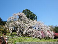 ここの桜は始めてです。 いつもは素通りした所でしたが気になっていた場所でした。
